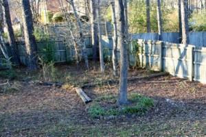 Backyard Before Redux