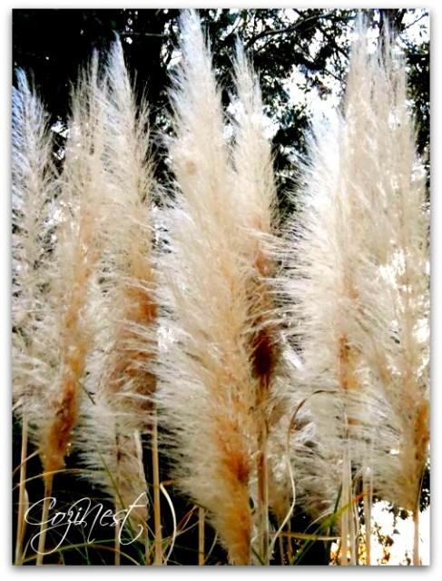 Feathery Plumes