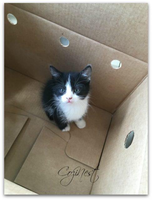 Kitten Adoption Day