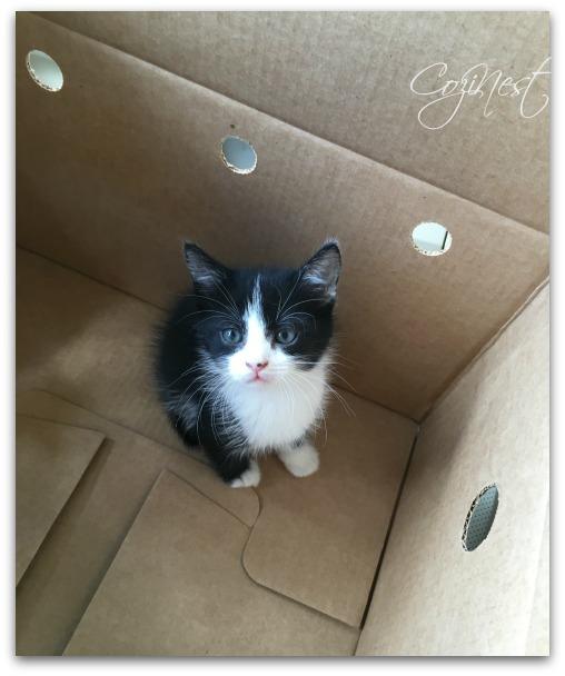 Rescue a Kitten