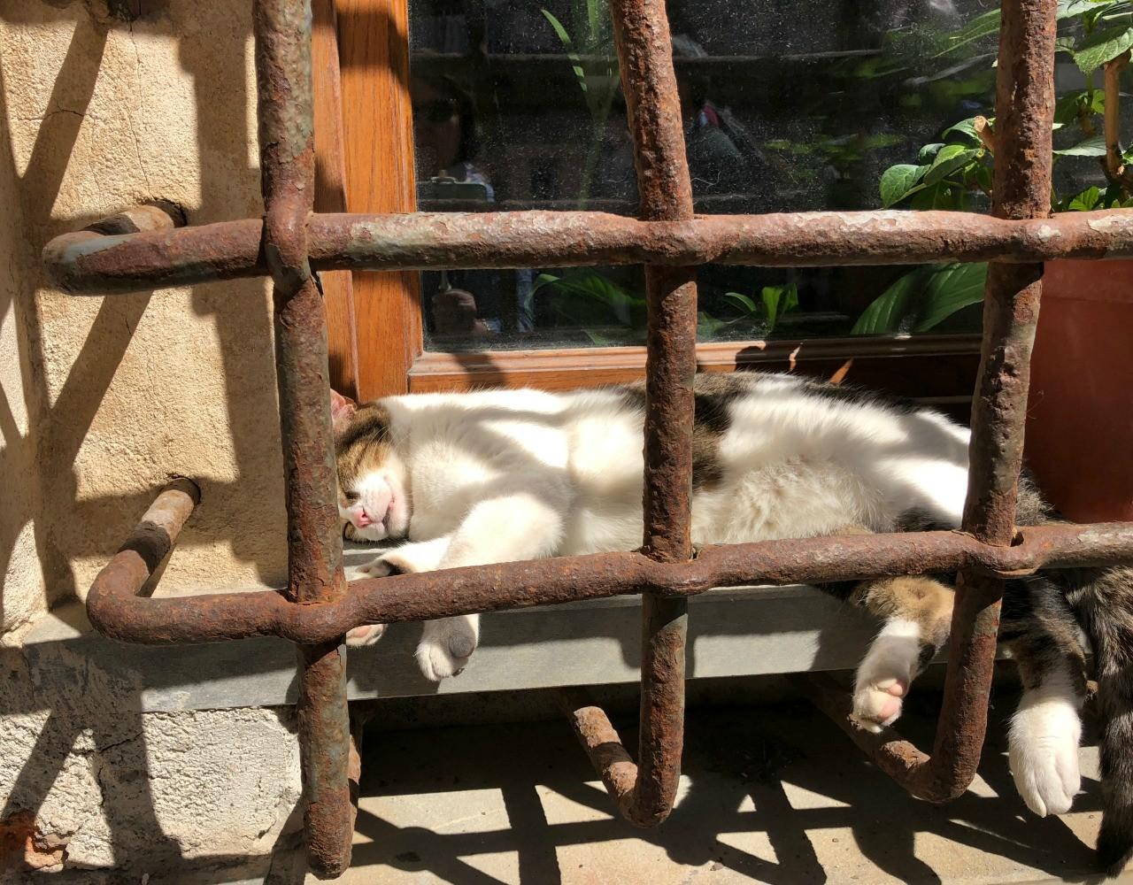 Jailhouse Cat