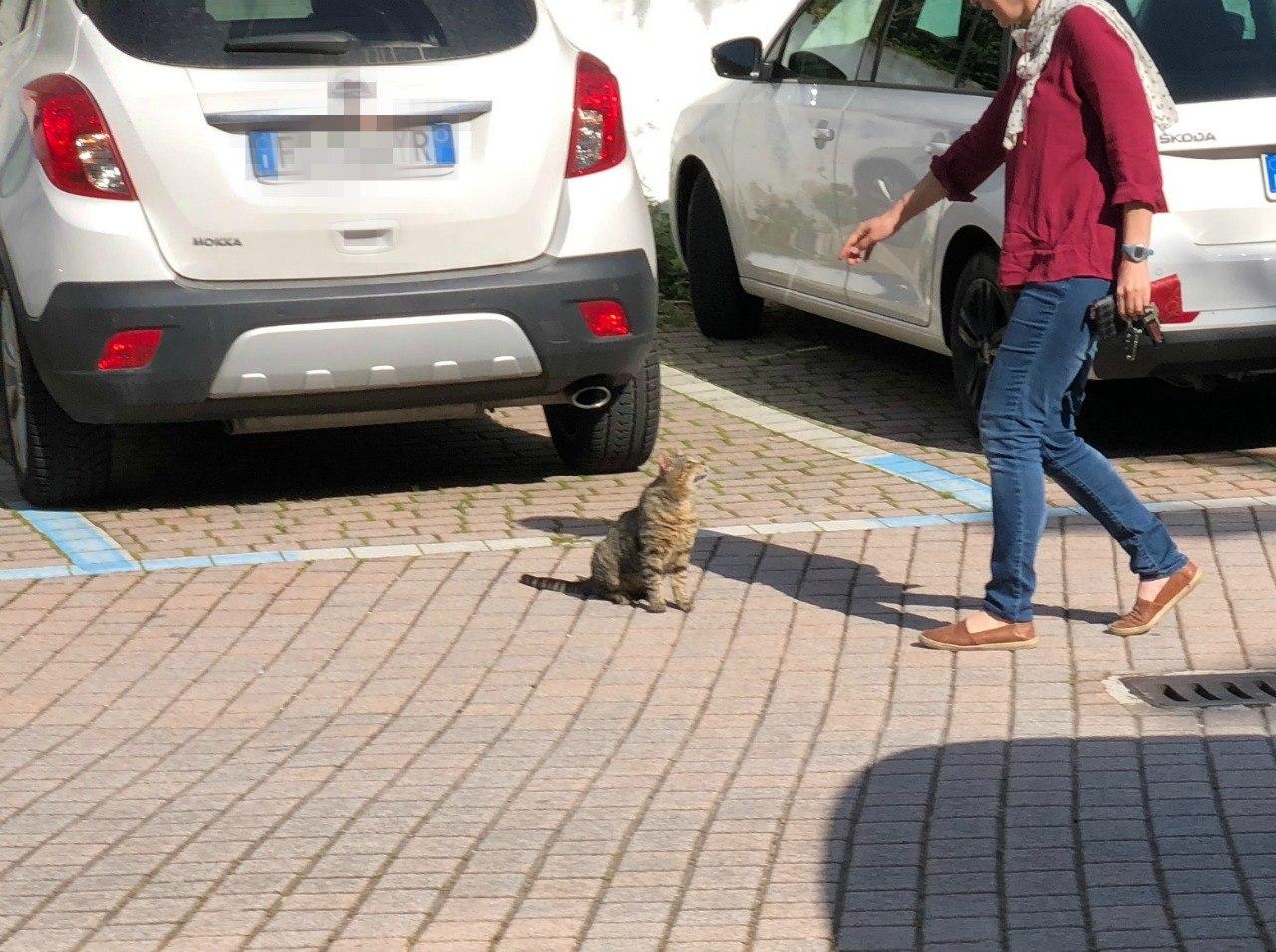 Hitchhiker Kitty