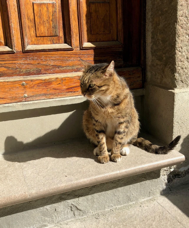 Step Kitty