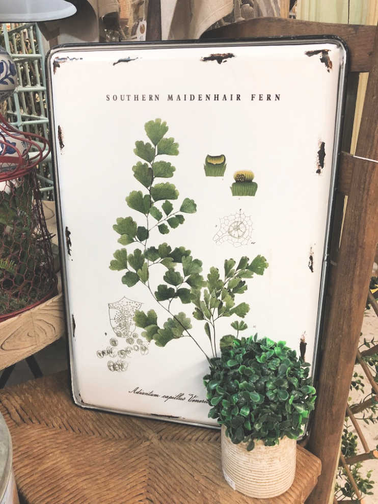 Herbs Wall Art